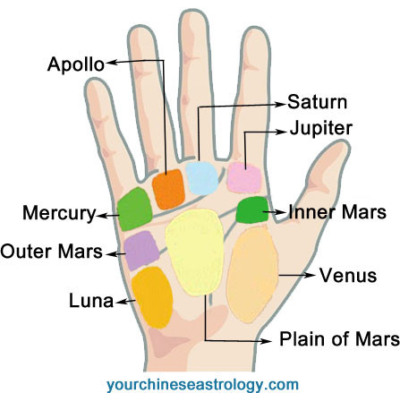 10 Reasons Why Palmistry Mounts Is Common In USA. | palmistry mounts