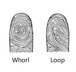 Fingerprint Palmistry: Whorl and Loop Patterns, Meaning and ...
