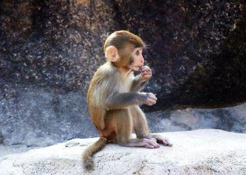 Dreams About Monkey Monkey Dream Meanings And Interpretations